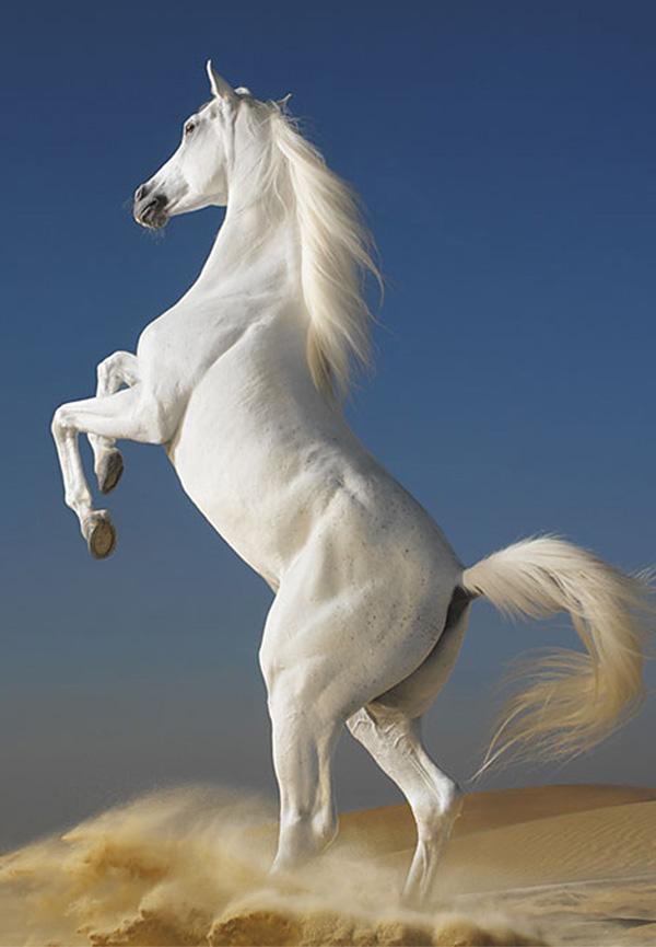 PIN_White_Horse_15544
