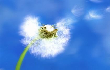 allergy_420w-420x0