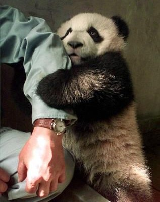 panda_holds_hand(arm)