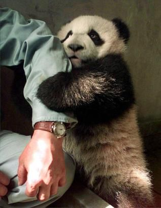 panda_holds_hand(arm)